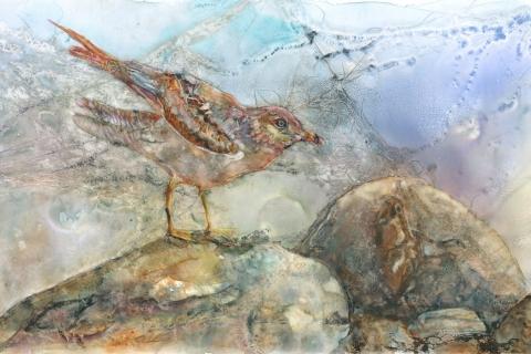 Gull on Rocks